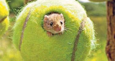 Dal centrale a casa per i topi : come riciclare le palle da tennis