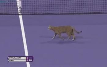 WTA DOHA : Il gatto della Vinci