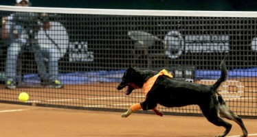ATP SAN PAOLO : I cani raccattapalle