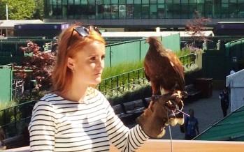 WIMBLEDON : Rufus il falco che tiene lontani i colombi